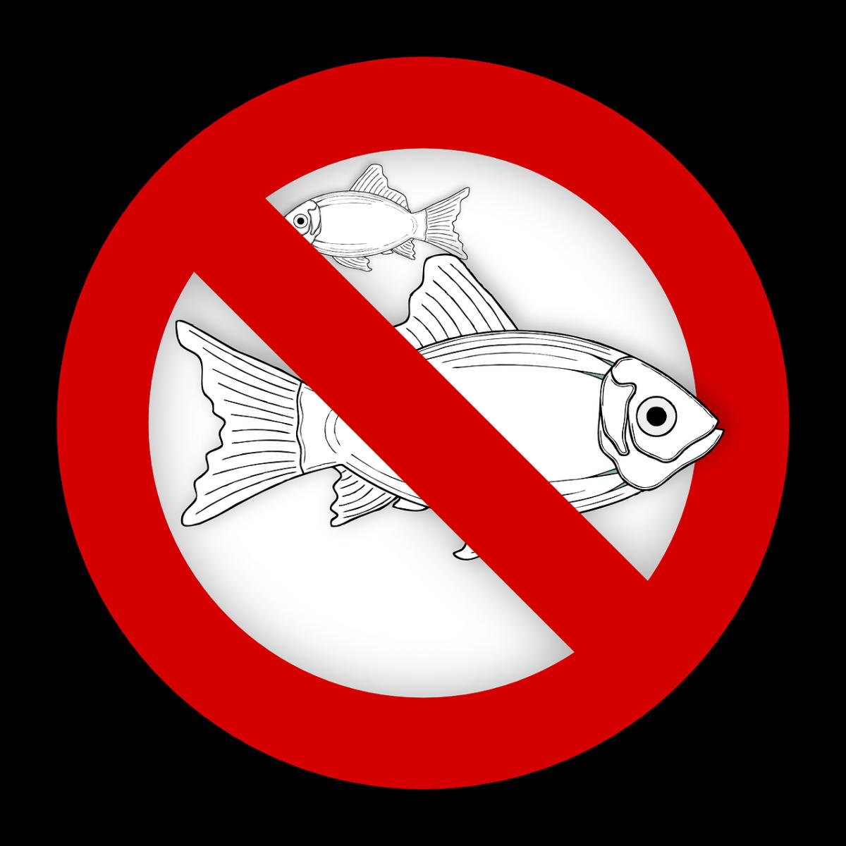 Allergisk mot fisk
